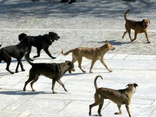 Τα αδέσποτα περισυλλέγει ο Δήμος Διδυμοτείχου