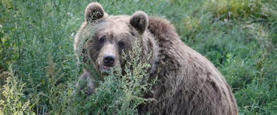 Αρκούδα επιτέθηκε σε κυνηγό στη Φλώρινα!