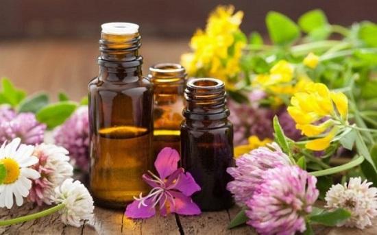 Δημ. Βιβλιοθήκη Αλεξ/πολης: Ομιλία με θέμα «Βότανα και αρωματικά φυτά ως φάρμακα και ως συμπληρώματα διατροφής»