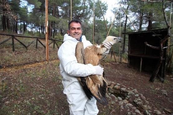 Απελευθέρωση Όρνιου στο Δάσος της Δαδιάς