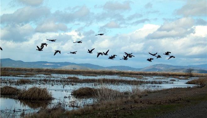 Πάρα πολλά ήταν τα πτηνά που ξεχειμώνιασαν φέτος στο Δέλτα του Εβρου