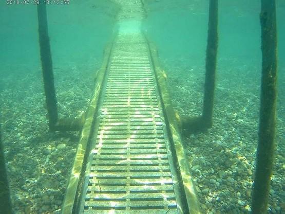 Seatrack: Εξερευνήστε τον βυθό της παραλίας!