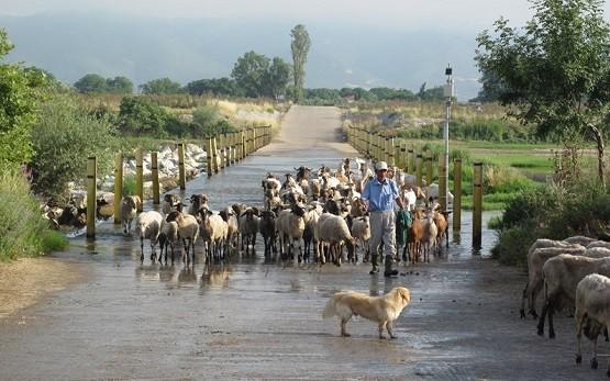 Συγκέντρωση διαμαρτυρίας στην Κομοτηνή ετοιμάζουν οι Κτηνοτροφικοί Σύλλογοι ΑΜΘ
