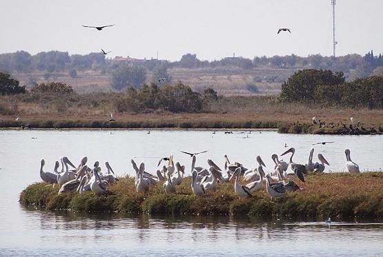 Καταμετρώντας τον πλούτο στο Εθνικό Πάρκο Δέλτα Νέστου-Βιστωνίδας-Ισμαρίδας