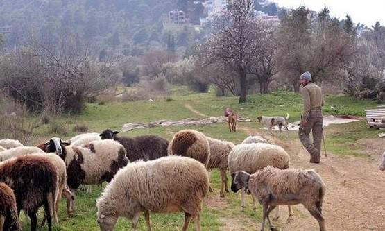 Ν. Δημόπουλος: «Φορολογία, ασφαλιστικό, κόστος παραγωγής και τιμές μας γονατίζουν»