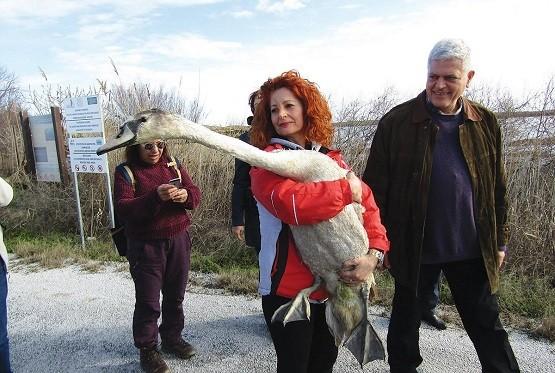 Η ΑΝΙΜΑ ήρθε για να απελευθερώσει στη λίμνη Βιστωνίδα τρία πτηνά