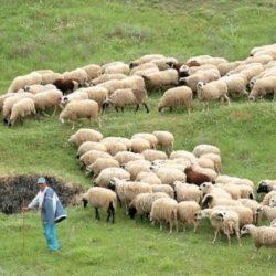 Τα ΓΕΩΤΕΕ Αν. Μακεδονίας και Θράκης αντιδρούν: Να αρθεί η αδικία σε βάρος των κτηνοτρόφων μας