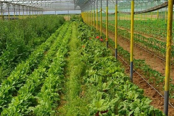 Μόνο 19 από τους 1.453 αγρότες εγκρίθηκαν στην ΑΜ-Θ για τις βιολογικές: «δημιουργούν μεγαλοτσιφλικάδες!»
