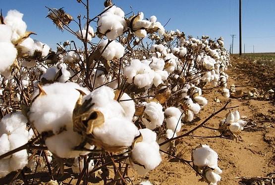 Ν. Ροδόπης: Υποχρεωτική είναι η χρήση πιστοποιημένων σπόρων