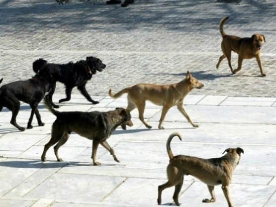 Δήμος Σαμοθράκης: Νέα σύμβαση για την περισυλλογή και φροντίδα αδέσποτων ζώων συντροφιάς
