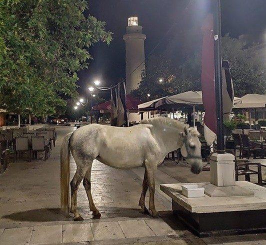 Όλη η Αλεξανδρούπολη «γελάει» με το άσπρο άλογο, αλλά είναι σωστό αυτό;