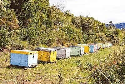 Κυνήγι μελισσοκλεφτών στη Ροδόπη