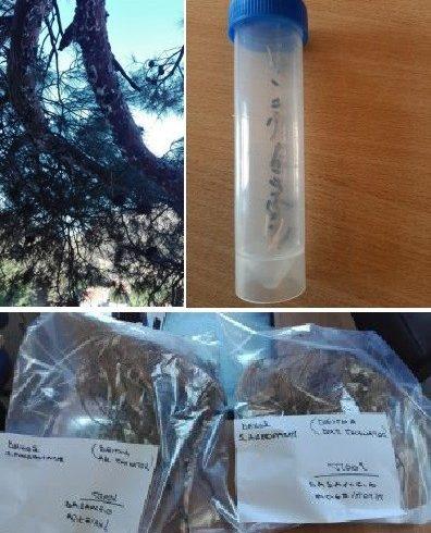 Σε κίνδυνο το δάσος της Χώρας Σαμοθράκης