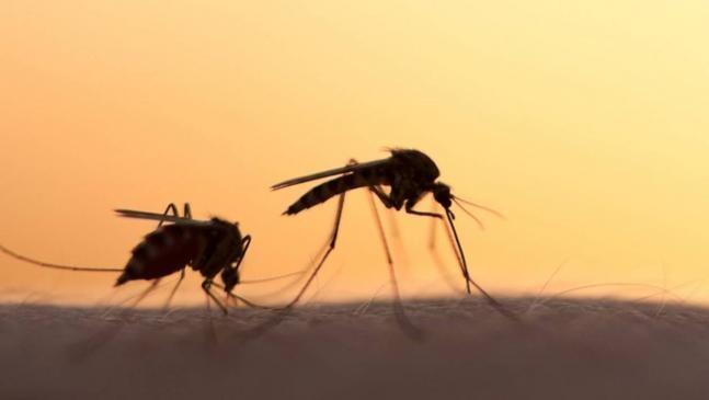 Τέσσερις οι νεκροί από τον ιό του Δυτικού Νείλου