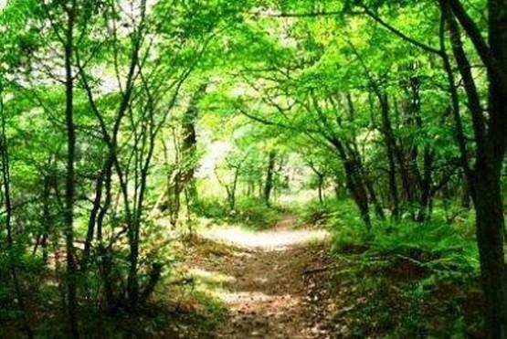 «Ημέρα χωρίς Αυτοκίνητο» με πεζοπορία στο Δάσος Δαδιάς