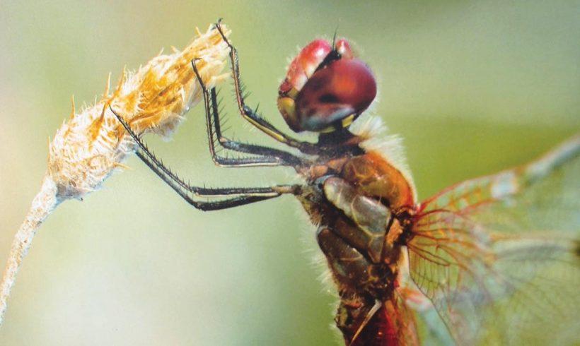 18ο πανελλήνιο εντομολογικό συνέδριο: Για επιστήμονες και επισκέπτες άνοιξε τις πόρτες του στην Κομοτηνή