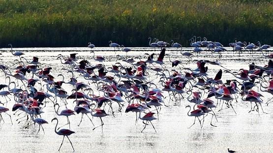 mayra_flamingko_porto_lagos2