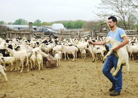 """Οι Κτηνοτρόφοι της ΠΑΜ-Θ ζητούν από τον Βορίδη την άμεση μετάβαση από τις ανοικτές τιμές του """"όσο πάει"""", στην επαγγελματική ενηλικίωση της ελληνικής κτηνοτροφίας"""
