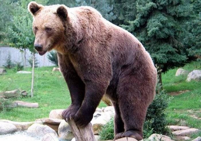 Συναγερμός για αρκούδα που εντοπίστηκε στην Ξάνθη !