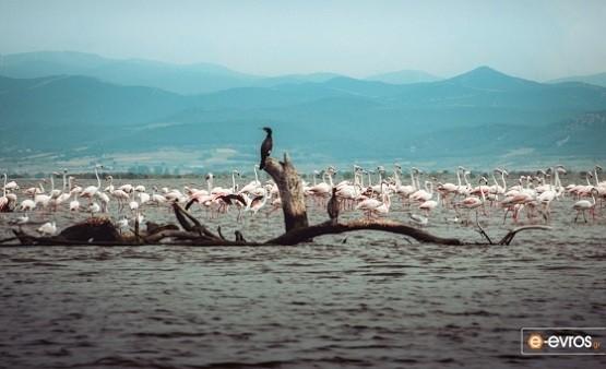 Μεσοχειμωνιάτικες μετρήσεις στο Δέλτα του Έβρου: Πάνω από 40.000 πουλιά ξεχειμωνιάζουν στον υγρότοπο