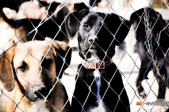Με 130.000 ευρώ θα ενισχυθεί ο Δήμος Αλεξανδρούπολης για το καταφύγιο των αδέσποτων ζώων