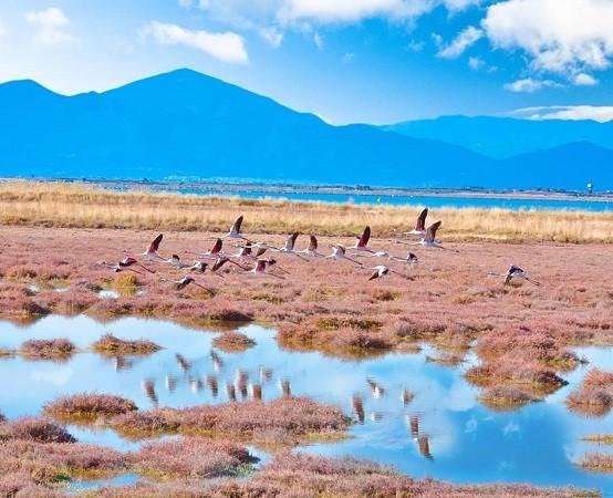 Φλαμίνγκο και άλλα 259 είδη πτηνών σε Βιστωνίδα και γύρω λίμνες