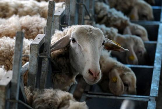 Δίκαιη κατανομή της νέας ΚΑΠ ζητούν οι Κτηνοτροφικοί Σύλλογοι ΑΜΘ