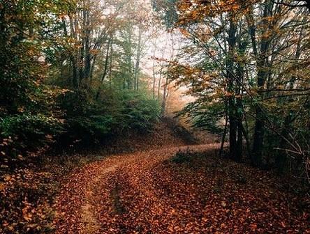 Έβρος: Αποκατάσταση δασικού δικτύου 460 χλμ