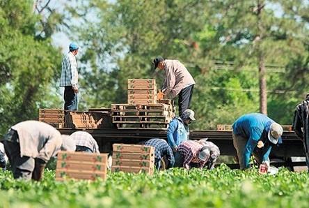 Έλλειψη ντόπιων εργατών γης στη Ροδόπη, περιμένουμε τους Βούλγαρους